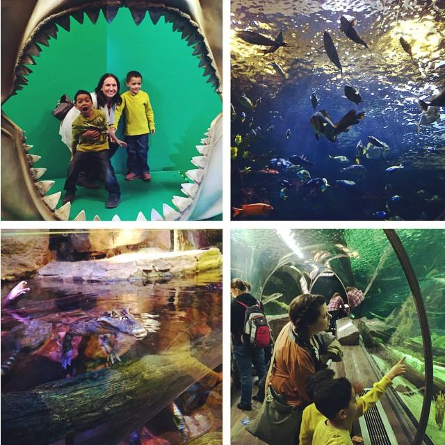 {Beat the Winter Blues} SEA LIFE Minnesota Aquarium