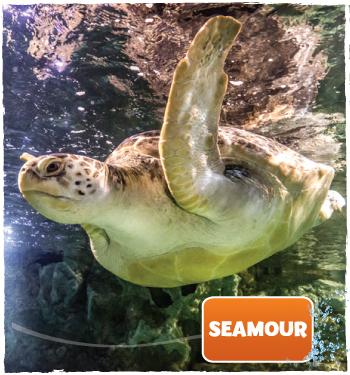 Seamour