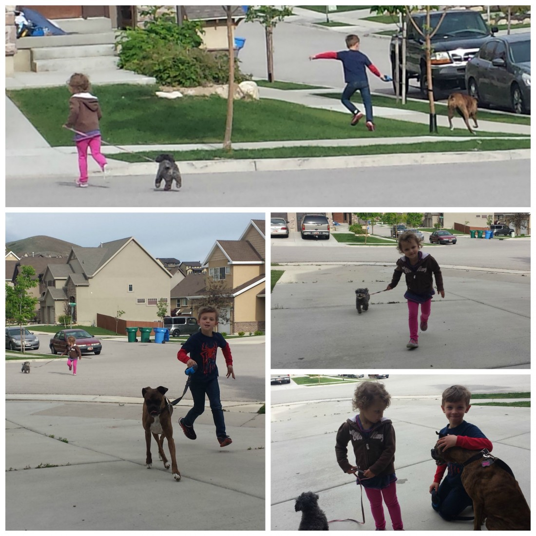 kidswalkingdogs