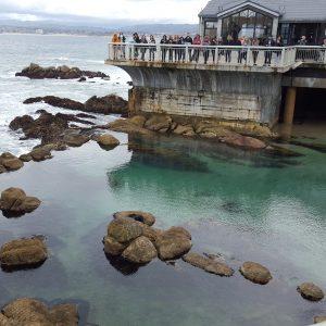 Visiting the Monterey Bay Aquarium in Monterey California #FindingDoryEvent
