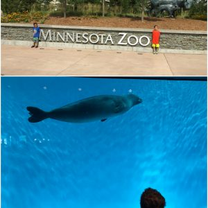 There's Still Time to Visit the Minnesota Zoo Before School Starts!