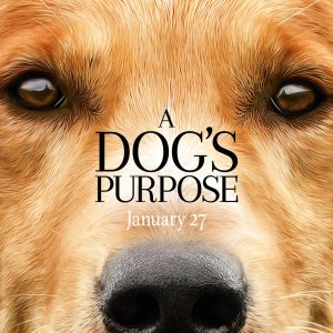 A Dog's Purpose Film Review~ Opens Today In Theaters! #ADogsPurpose