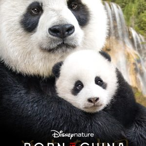 Disneynature's BORN IN CHINA- Now Playing In Theaters!~ My Review #BornInChina