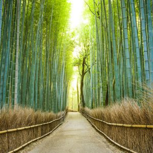 Fun Things to Do in Kyoto When Traveling Alone