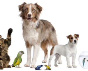 Tips to Keep a House with Pets Clean